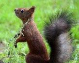 le-03282016-squirrel-4