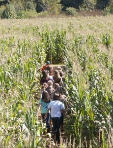 walking-through-corn-maze-copy-e1466098597853-230x300
