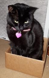 BoxKitty